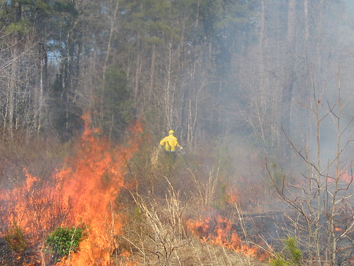 Photo of Firefighter Battling Blazing Wildland Fire