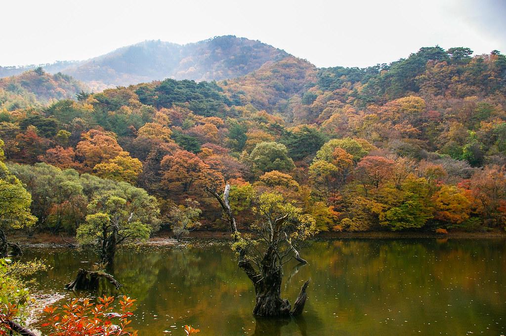 주산지(Jusanji Pond, Cheongsong, South Korea) | 주산지(Jusanji