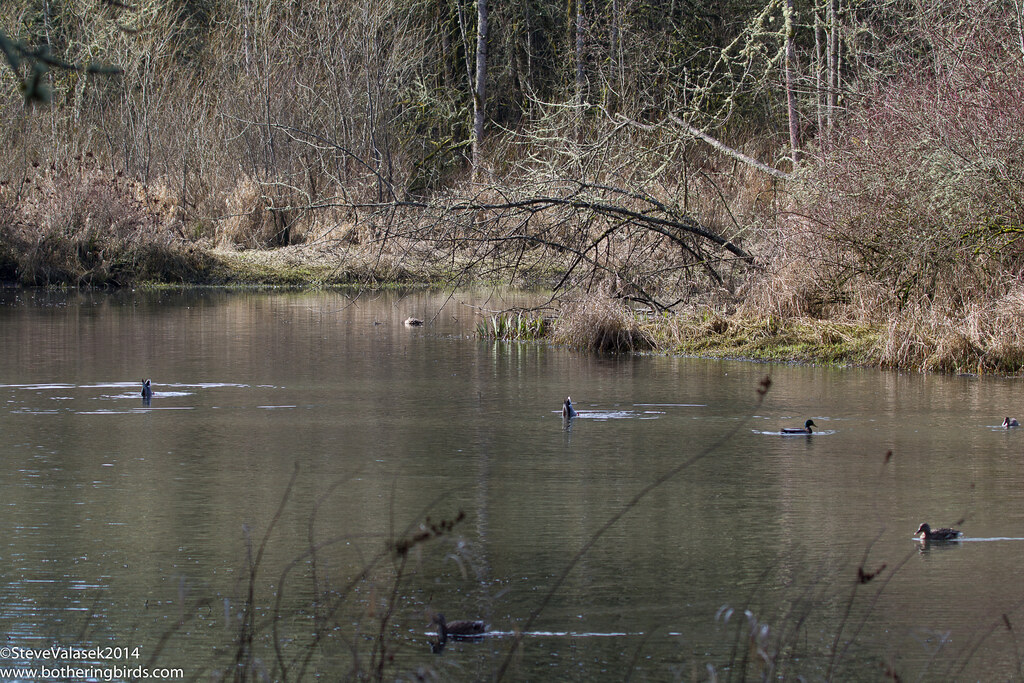 Big Pond at Tualatin Nature Park