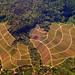 Aerial View of Forest and Vineyards - Kernen-Stetten - Metropolitan Area Stuttgart