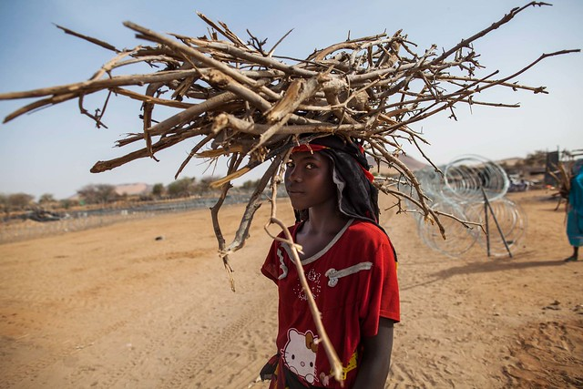 Collecting Firewood in Africa