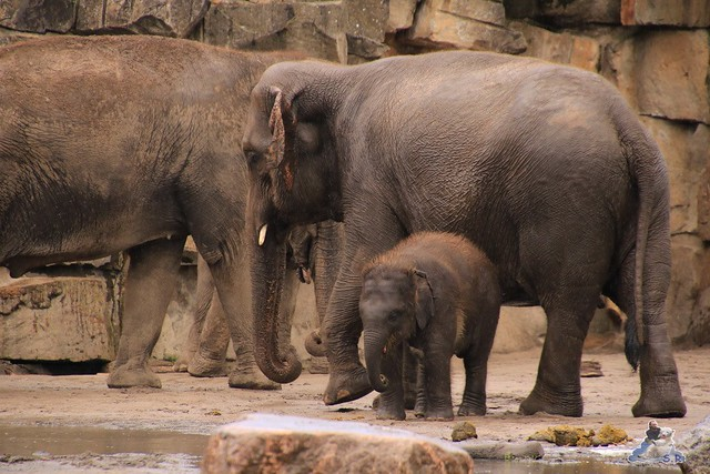 Tierpark Berlin 18.06.2016  0140