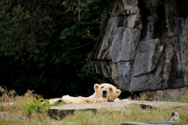 Tierpark Berlin 18.06.2016  012