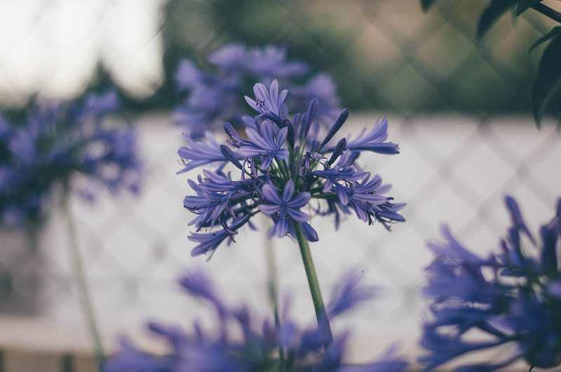 Purple poetry