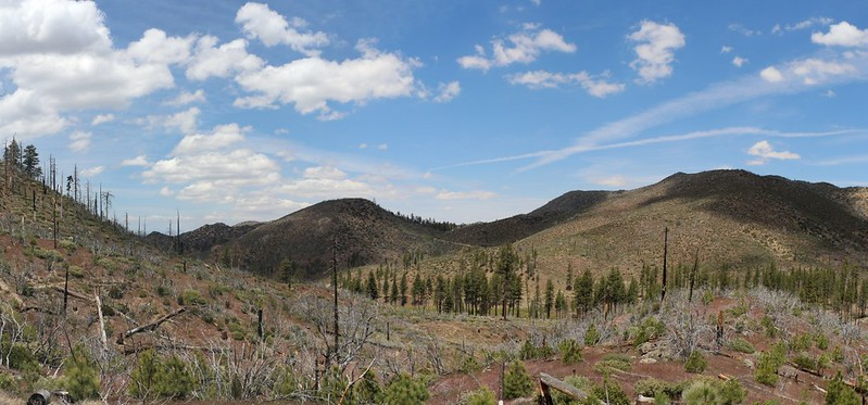 Panorama shot along the PCT with pine trees down below by Holcomb Creek