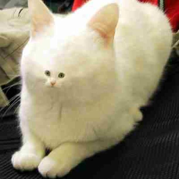 Cat with a tiny face lmao!!! #cat#kitty#smallface#lol#wtf ...