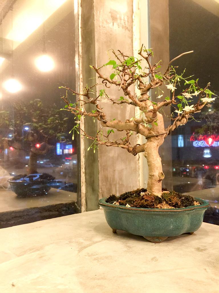 P.S. Tokyo's small bonsai tree