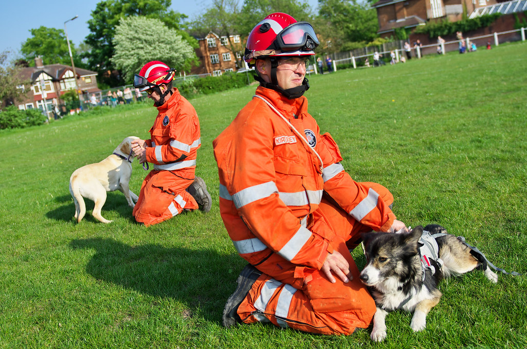 Usar search dogs for sale