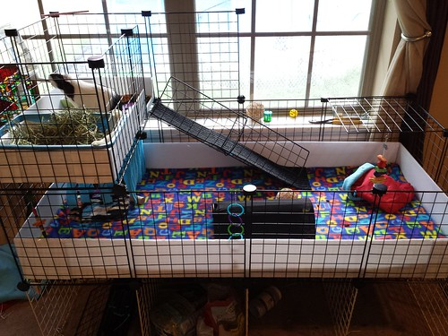 2x4 c c cage with 1x2 kitchen loft flickr photo sharing for Where to get c c cages