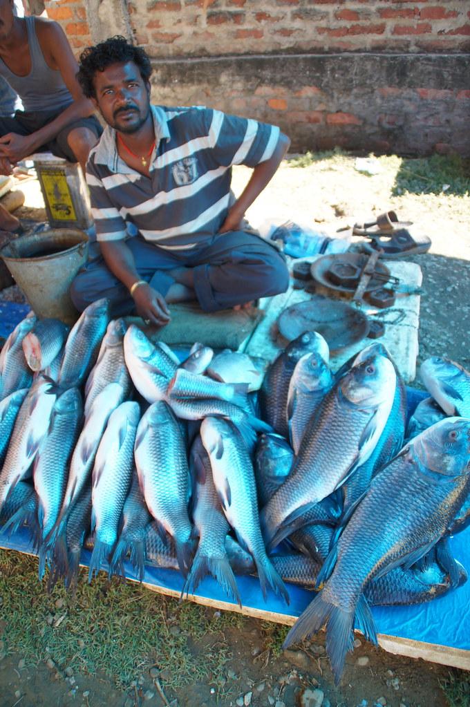 Fish market dimapur assam province india sony dsc for Williams fish market