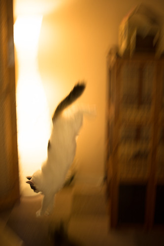 Panning of a cat