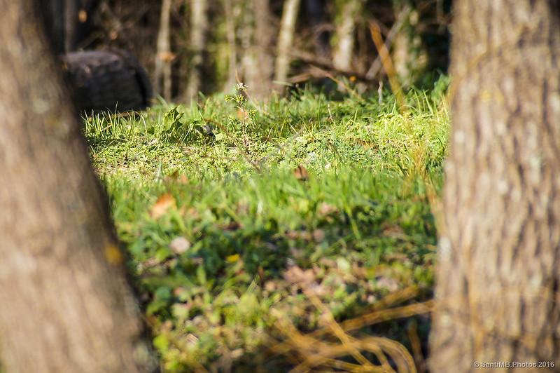 Pájaro observando en la hierba