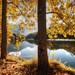 Los amarillos del otoño