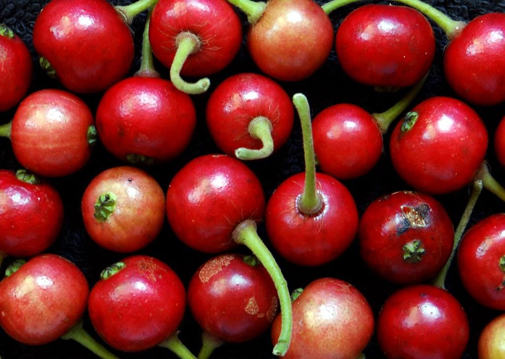 fruit strawberries 4 - photo #32