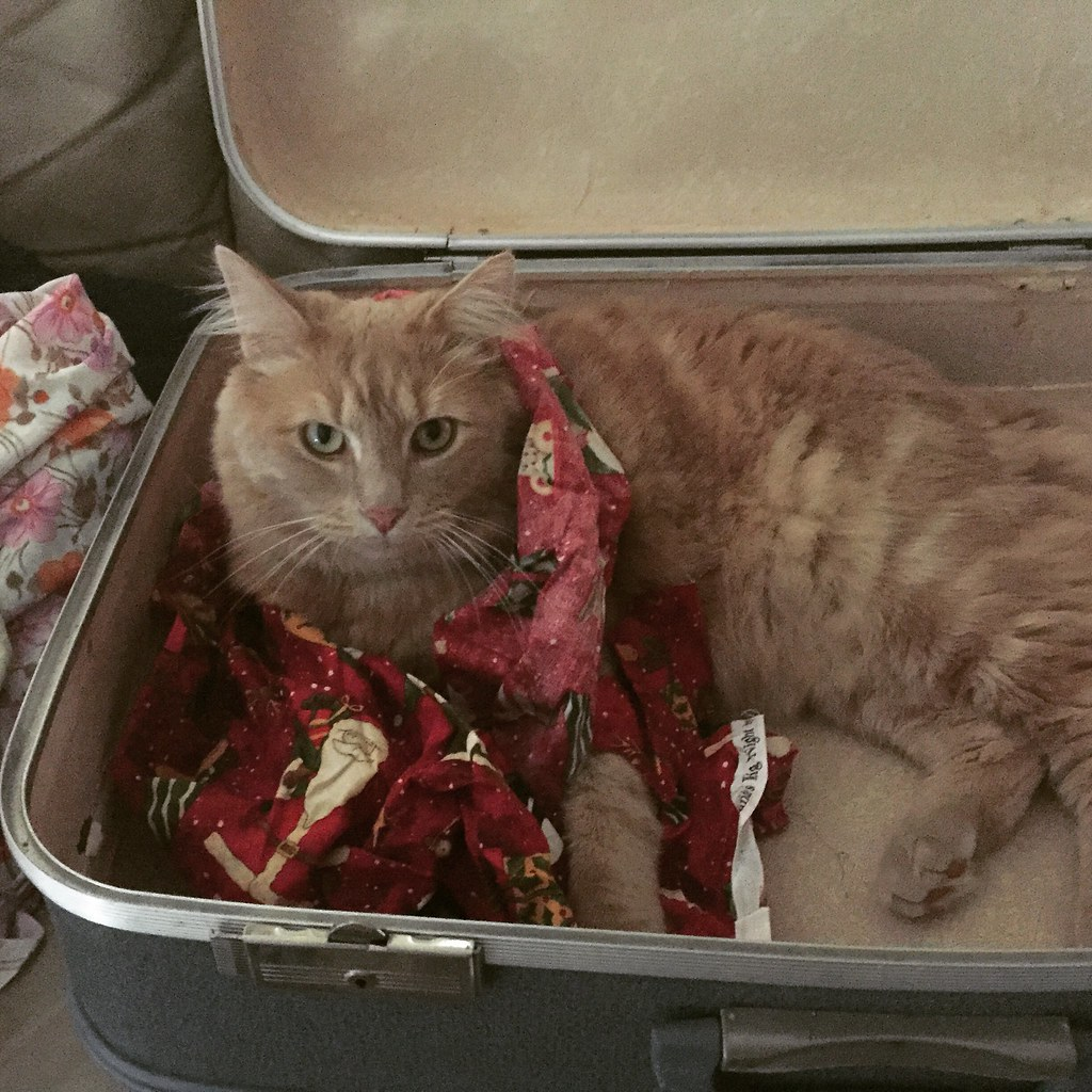 sampson the ginger cat sitting in my fabric stash suitcase, covered in scraps