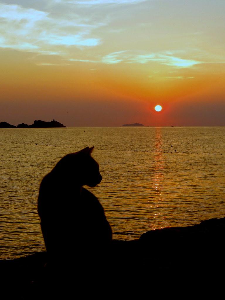 Sunset cat   Carine06 ...