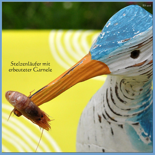 Bretagne-Urlaub 2016: Ferienhaus - Garten - Karla Kunstwadl - Aperitif - Garnelen - gesalzene Butter - Radieschen - Stelzenläufer - Foto: Brigitte Stolle 2016