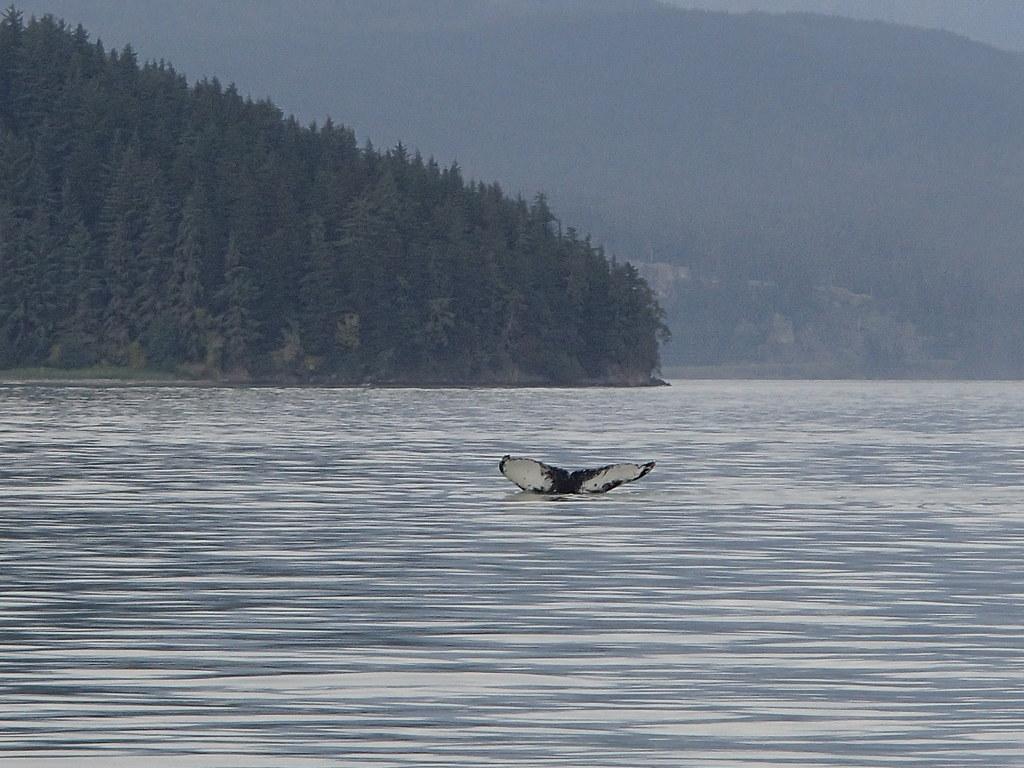 Juneau Alaska Whale Watching Tours