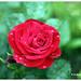 flower 014_small