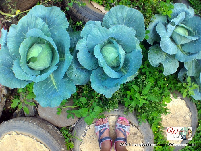 LivingMarjorney-Jaya-Secret-Garden-Cabbage