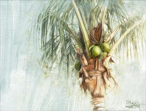 Image of a Palm Tree