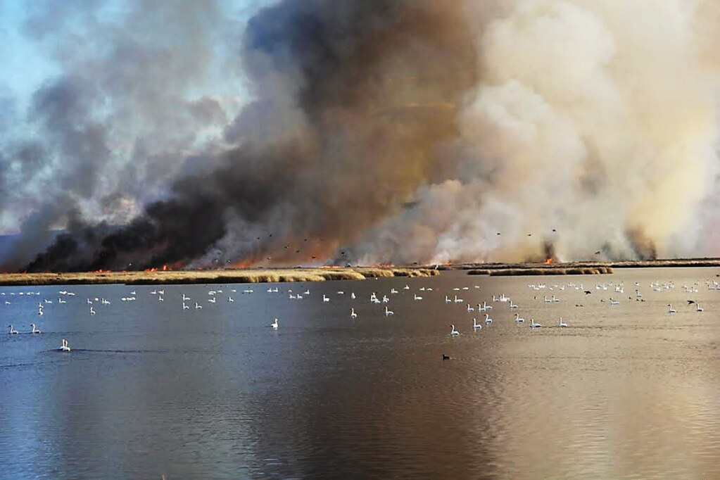 Fire and Tundra Swans | by USFWS Pacific