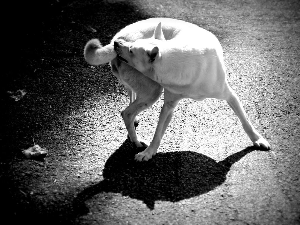流浪狗。(攝影:宋小海)