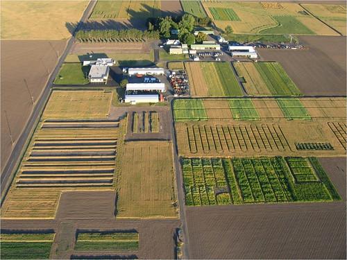 Aerial view of GRACEnet test plots