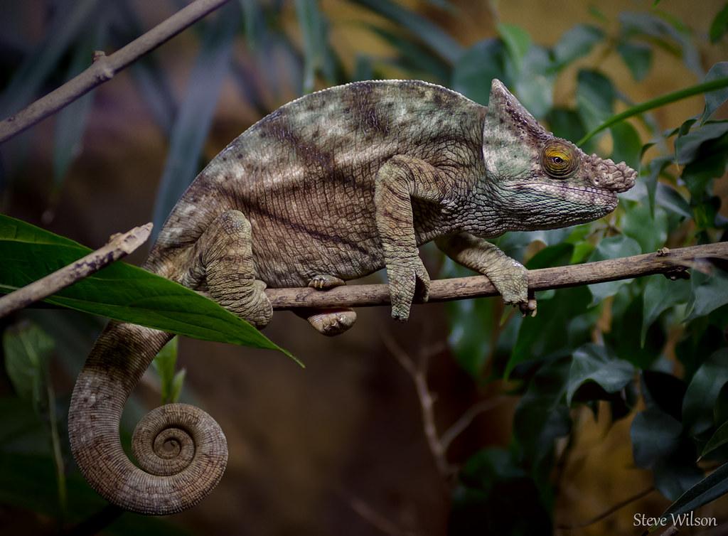Prey of the chameleon sexy 80s b movie trailer zuniga - 3 part 9