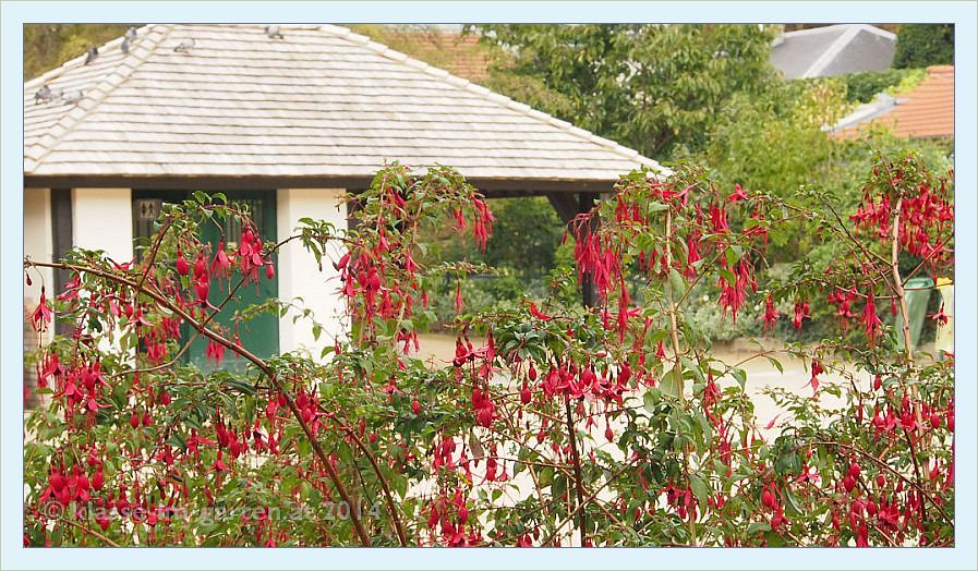 Paris jardin catherine laboure fuchsia magellanica for Jardin catherine laboure