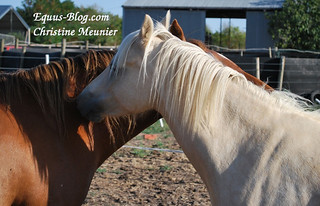 Equine Non Profits can be a Great way to Give Back and Learn new Skills