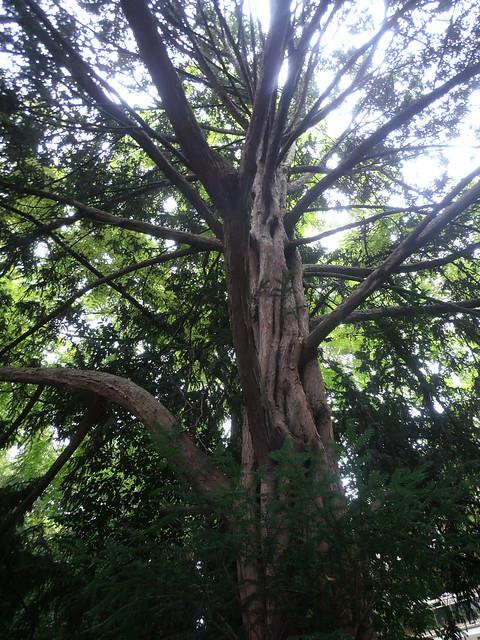 Jardin albert kahn boulogne billancourt un arbre mais l flickr photo sharing - Stephane sauvage jardin boulogne billancourt ...