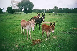 Donkeys | by Double_Nickel