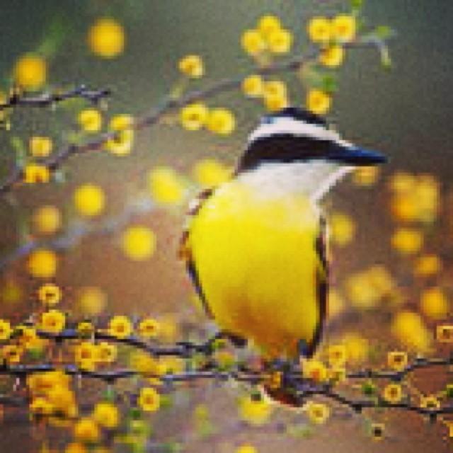 migratory bird google image