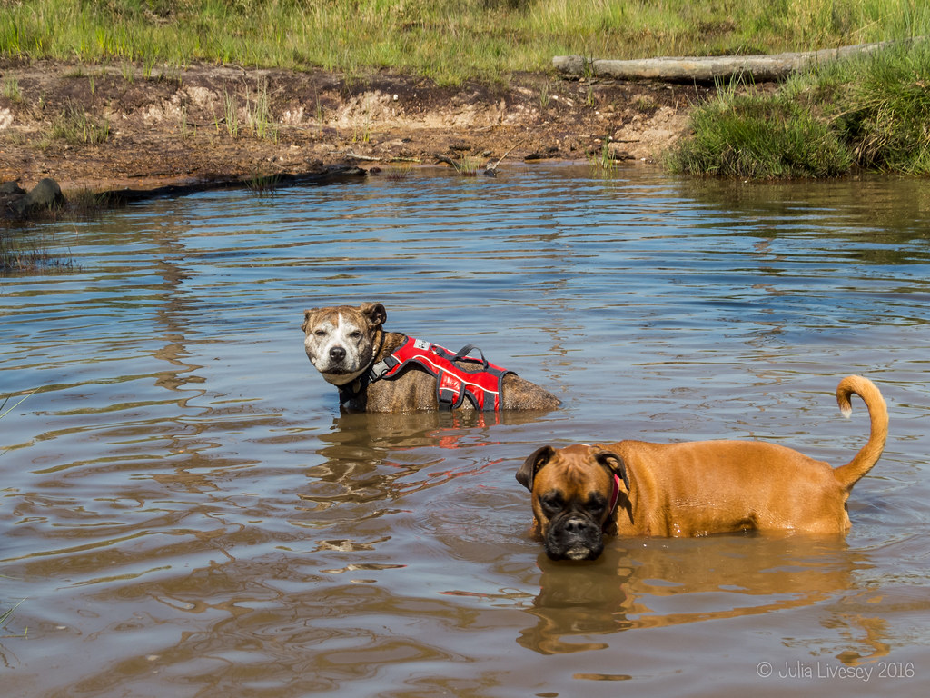 Jez sits down in the pond and is joined by a boxer