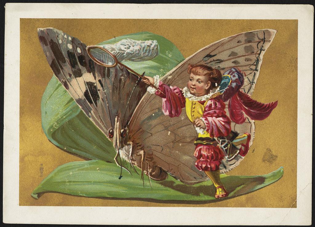 swinger clup swinger butterfly