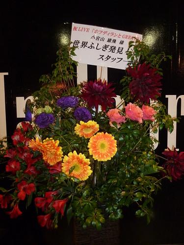 世界ふしぎ発見からの花