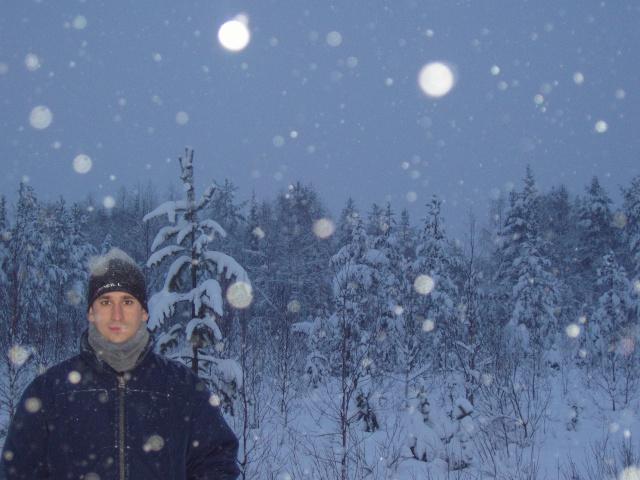 Sele en una nevada en Finlandia