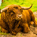 Load of Bull !