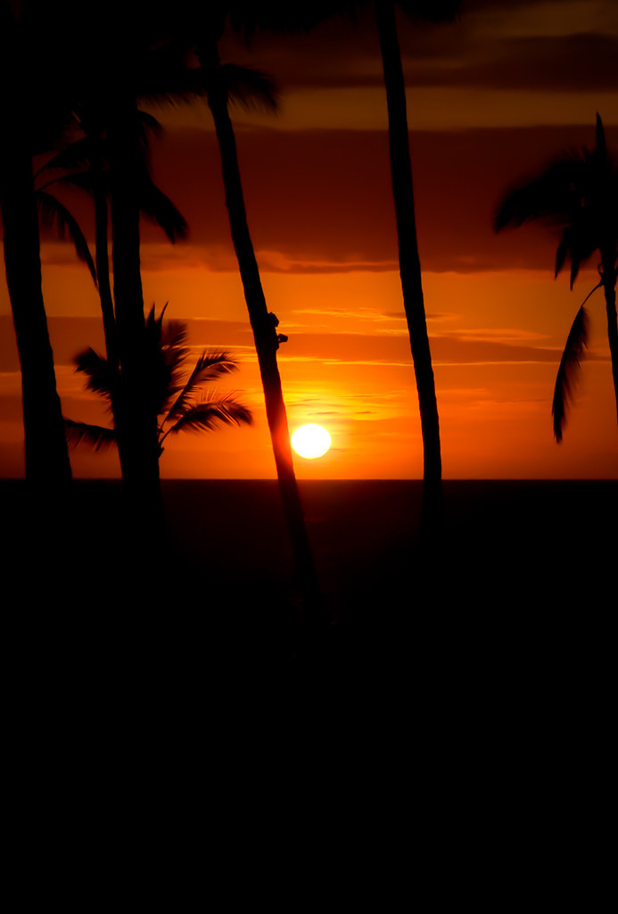 Beach Palm Tree Sunset Wallpaper Palm Tree Sunset Parallax