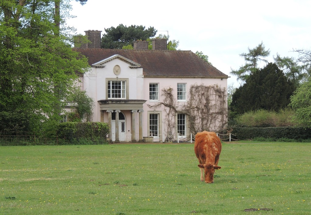 Woodbury Hall and cow, Everton, Bedfordshire ...