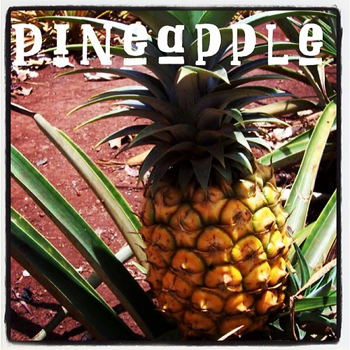 Garden Alphabet: Pineapple from the Dole Test Garden, Wahiawa, Oahu, Hawaii