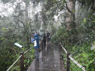 Rainforest Boardwalk at Red Peak Station