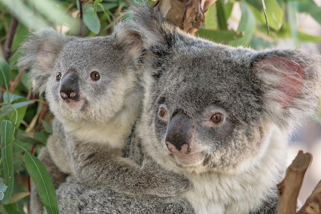 Free online dating san diego in Brisbane