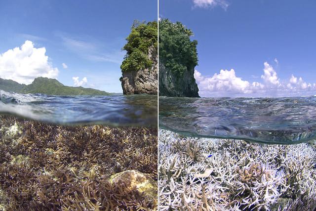 南太平洋島國薩摩亞的珊瑚白化前後對照。圖片來源:XL Catlin Seaview Survey