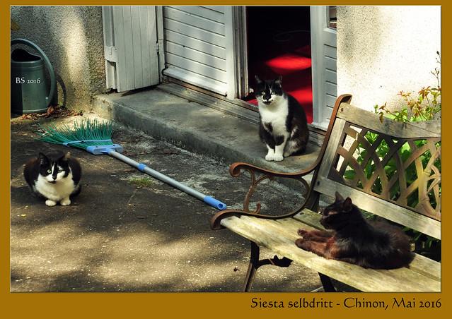 Siesta selbdritt / Drei Katzen im schattigen Hinterhof ... Foto: Brigitte Stolle