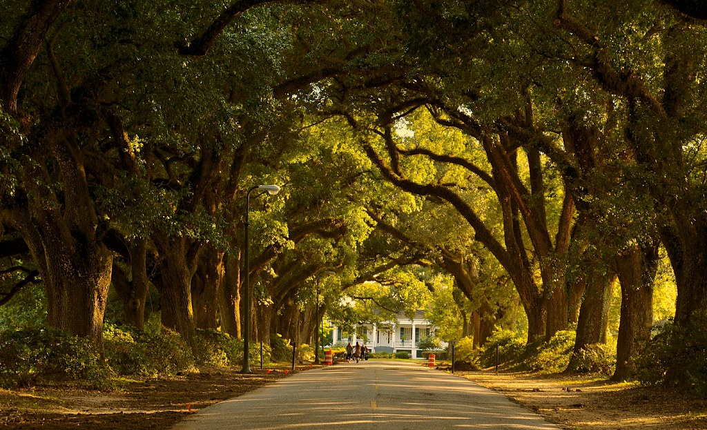 The Oak Alley In Spring Hill College Mobile Al Faungg