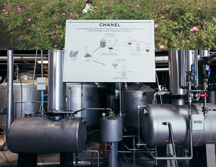 Discover CHANEL Nº5 L'eau in Grasse | HONEY & SILK