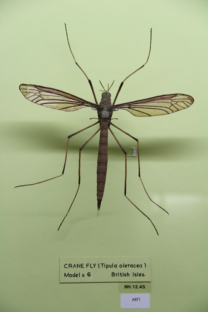 Giant Mosquito Model At The Horniman Museum And Gardens