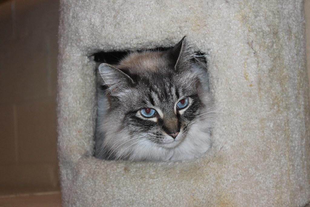 Cat Rescue Volunteering